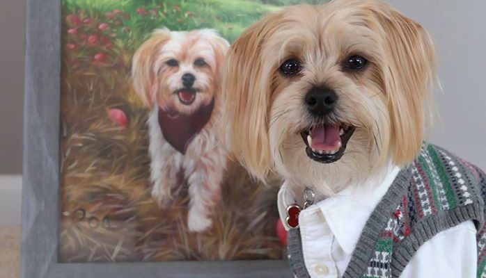 Rambo Reviews Paint Your Life Pet Portraits