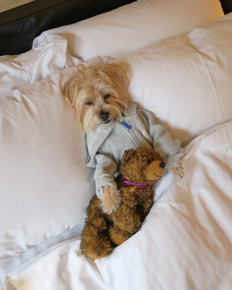 dog-friendly-hotels-nyc