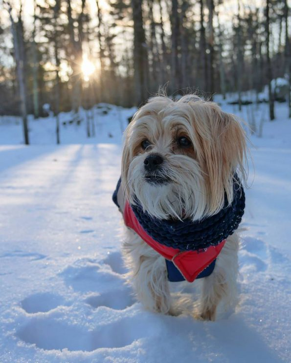 keeping-pets-safe-winter-cold-health