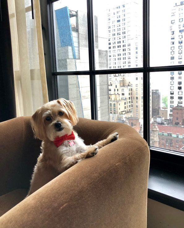 pet-friendly-nyc-viceroy-hotel