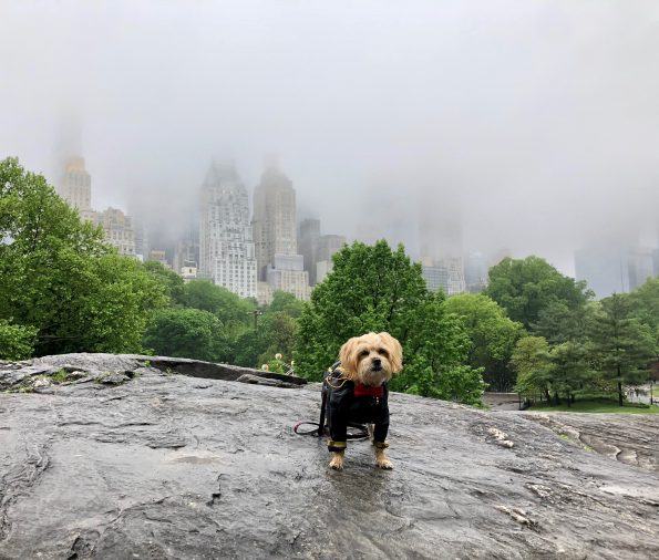 pet-friendly-nyc-central-park-1