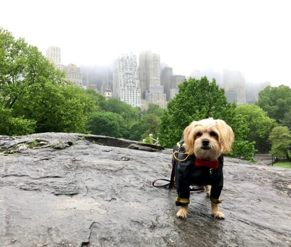 pet-friendly-nyc-central-park