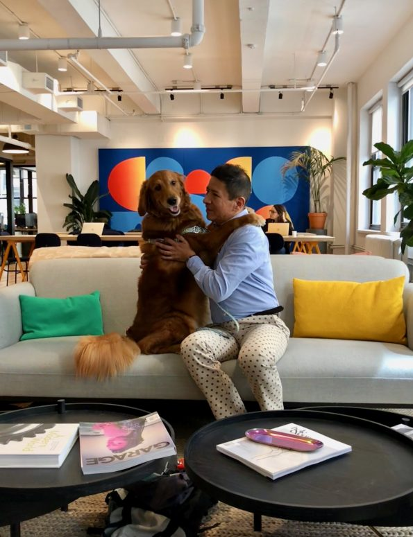 pet-friendly-nyc-dog-agency-3
