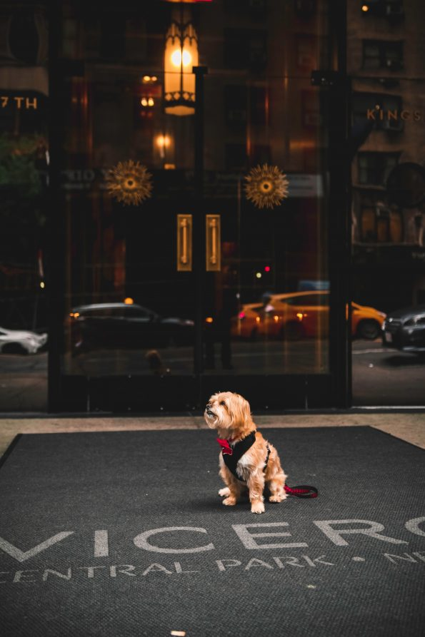 pet-friendly-nyc-viceroy-10