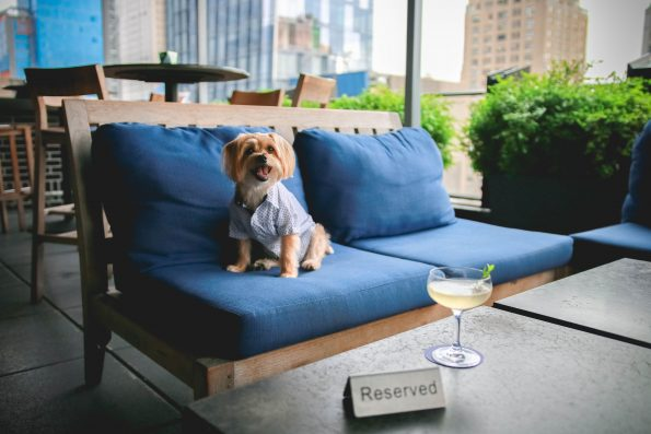 pet-friendly-nyc-rooftop-bar