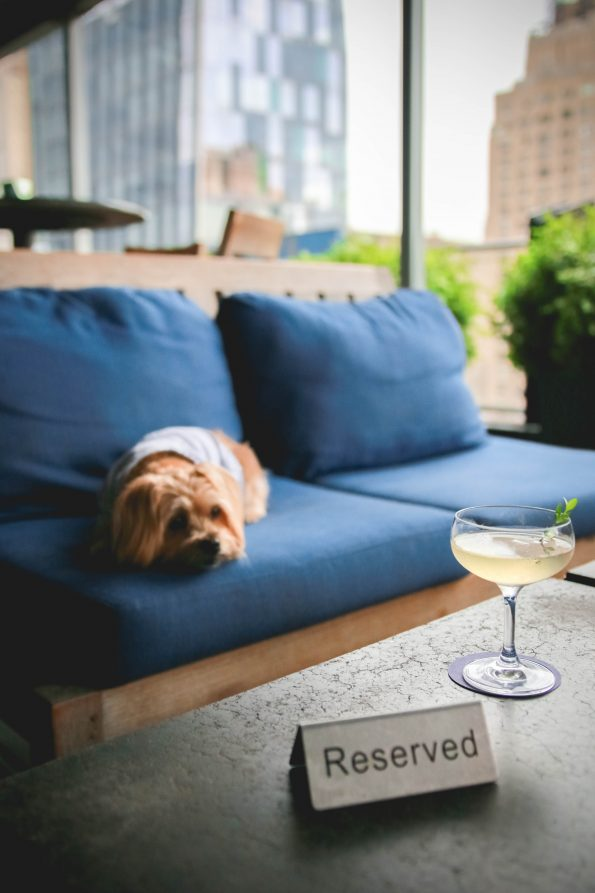 pet-friendly-nyc-rooftop-bar-2