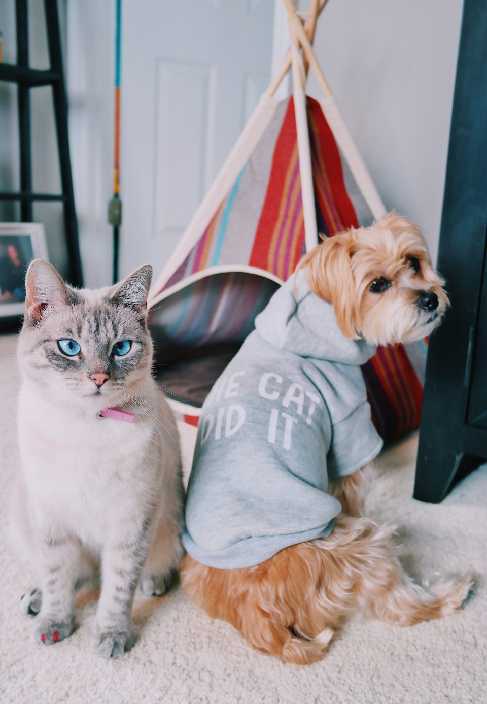 fifi-mcfluffypants-rambo-the-puppy-teepee