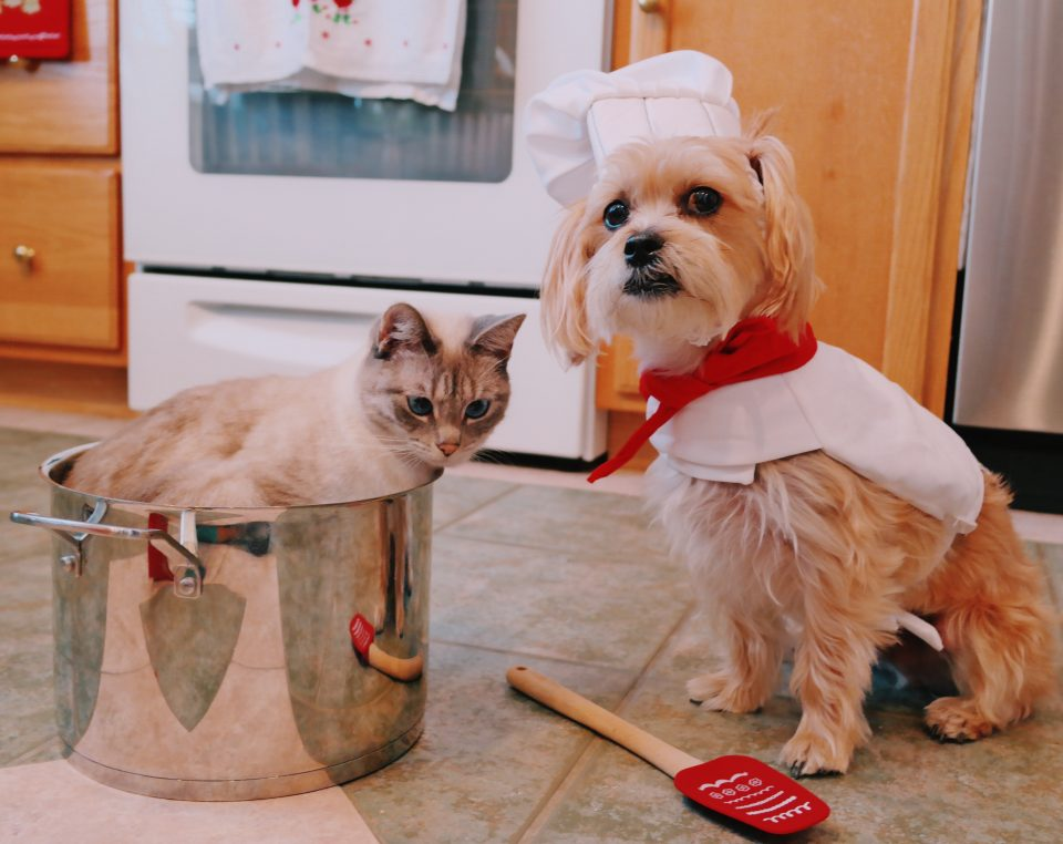 fifi-mcfluffypants-rambo-the-puppy-cooking