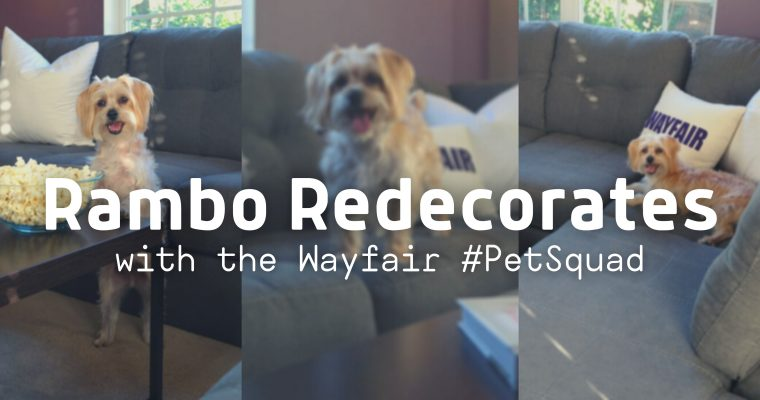 Rambo Redecorates With the Wayfair Pet Squad