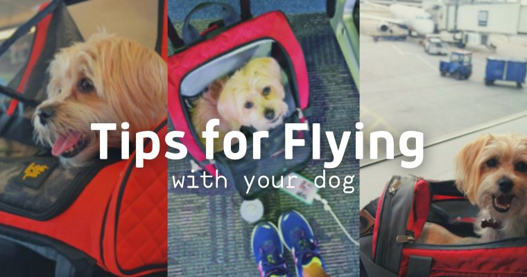 Rambo's Travel Tips for Flying With Your Dog