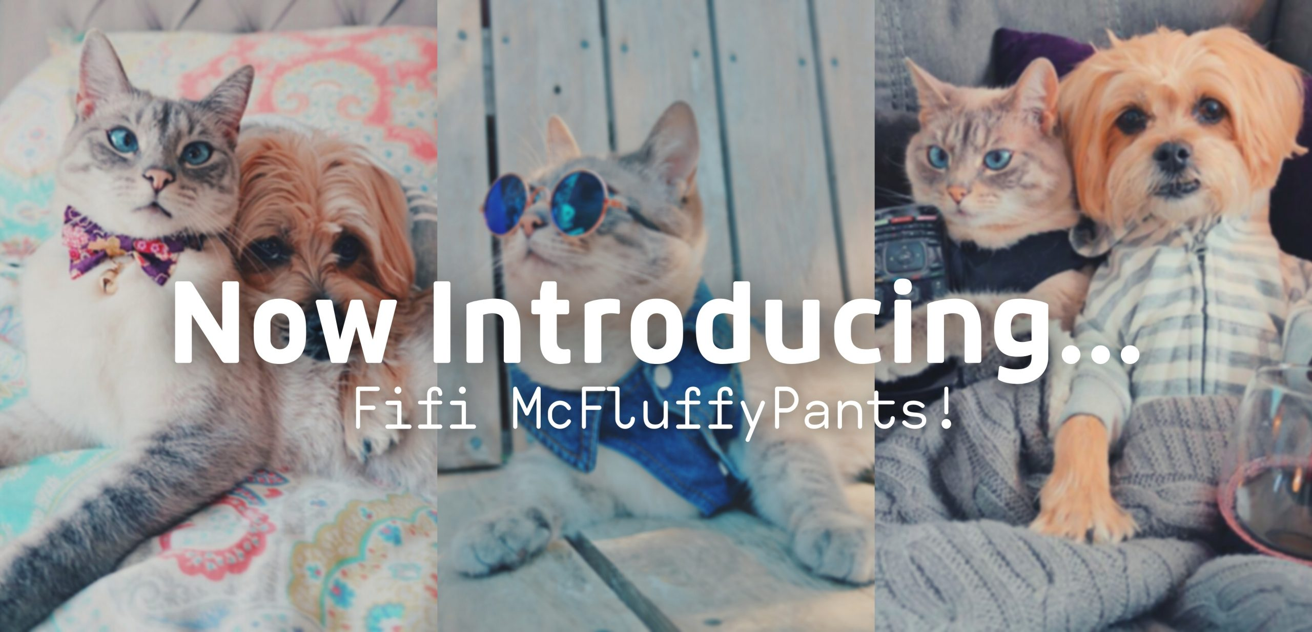 Introducing Fifi McFluffyPants!