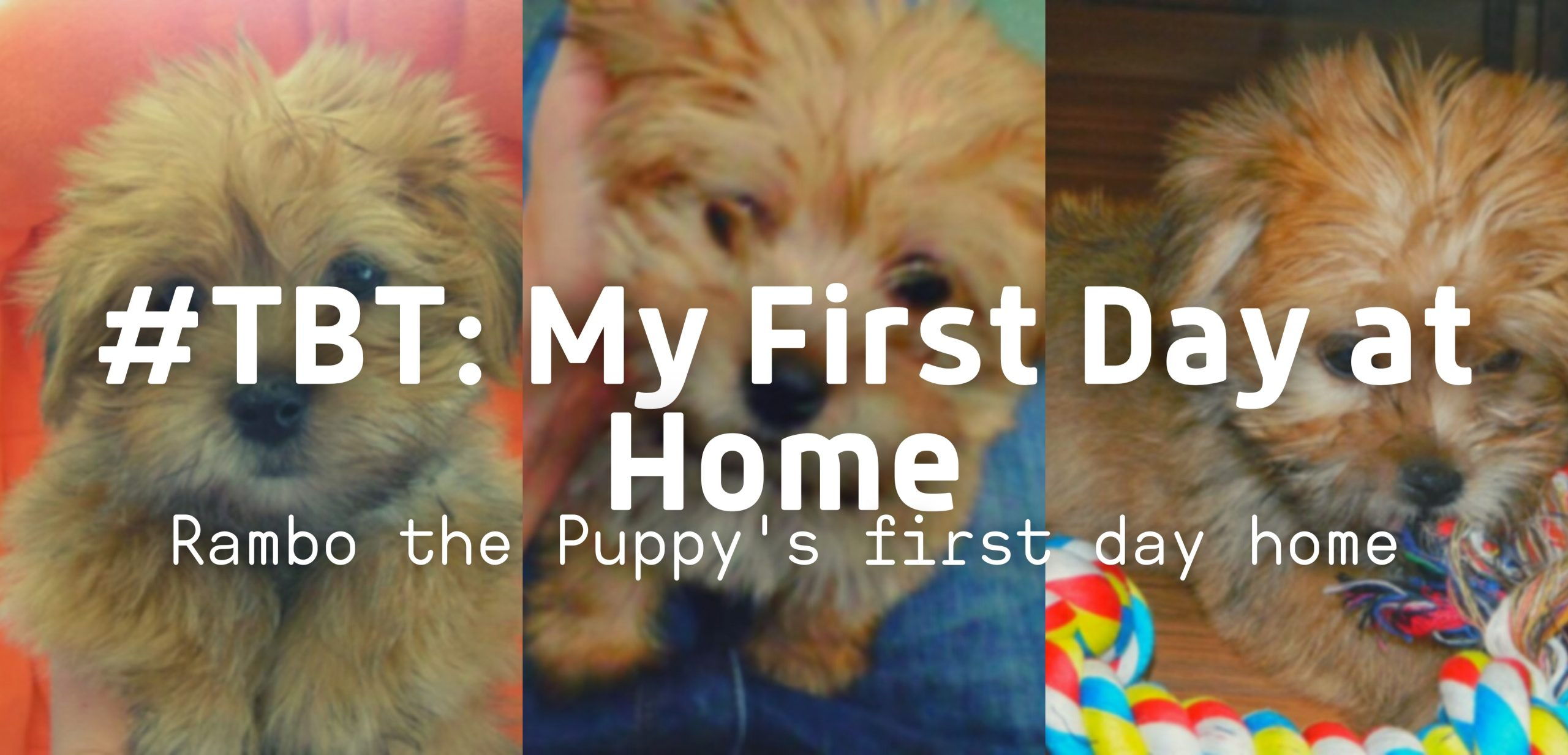 #TBT: Rambo the Puppy's First Day Home!