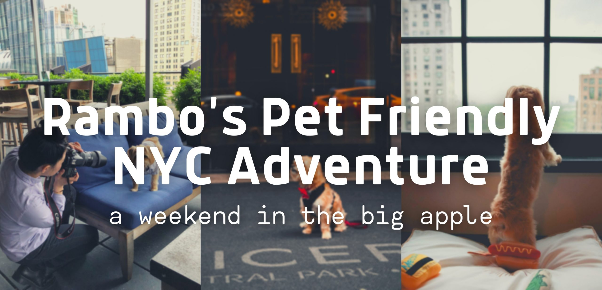 Rambo's Pet Friendly NYC Adventure