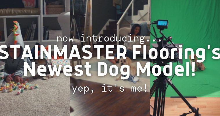 I'm a STAINMASTER Dog Model!