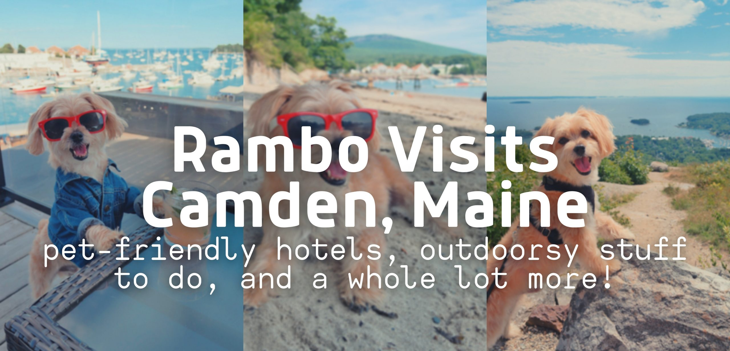 Rambo's Pet-Friendly Trip to Camden, Maine